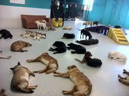 Afternoon nap time at Doggy Day Care